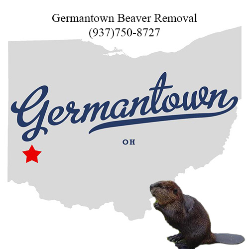 germantown beaver removal (937)750-8727