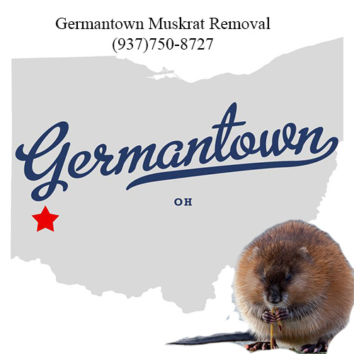 germantown muskrat removal (937)750-8727