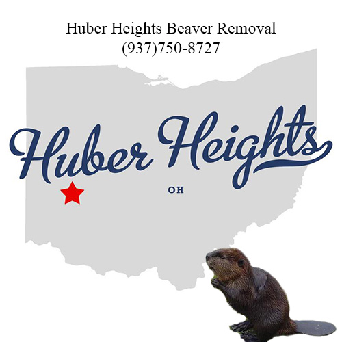 huber heights beaver removal (937)750-8727