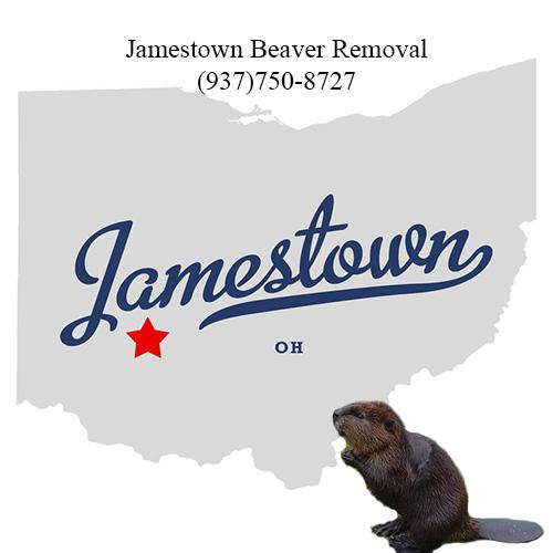 jamestown beaver removal (937)750-8727