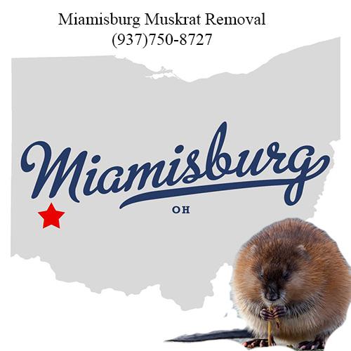 miamisburg muskrat removal (937)750-8727
