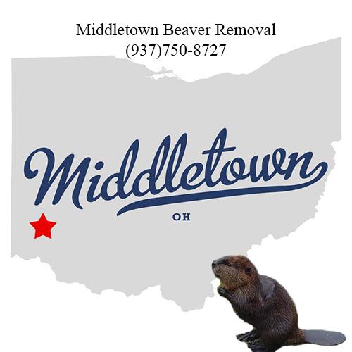 middletown beaver removal (937)750-8727