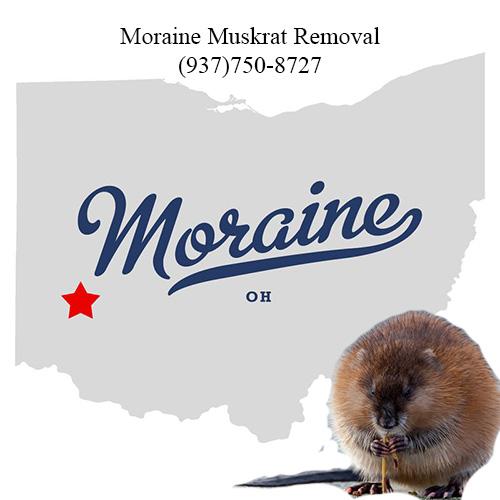 moraine muskrat removal (937)750-8727