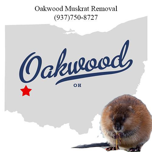 oakwood muskrat removal (937)750-8727