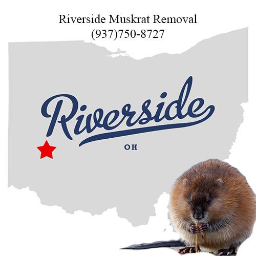 riverside muskrat removal (937)750-8727