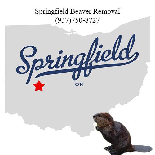 springfield beaver removal (937)750-8727