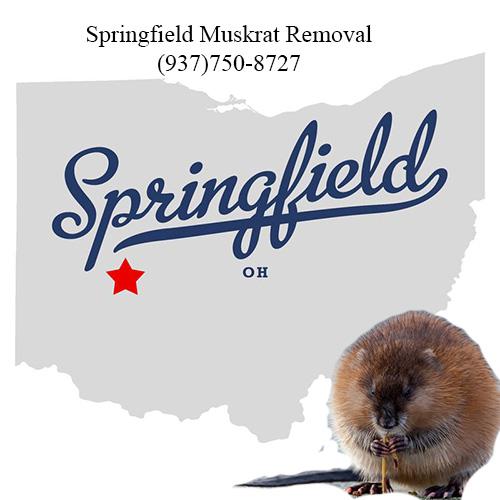springfield muskrat removal (937)750-8727
