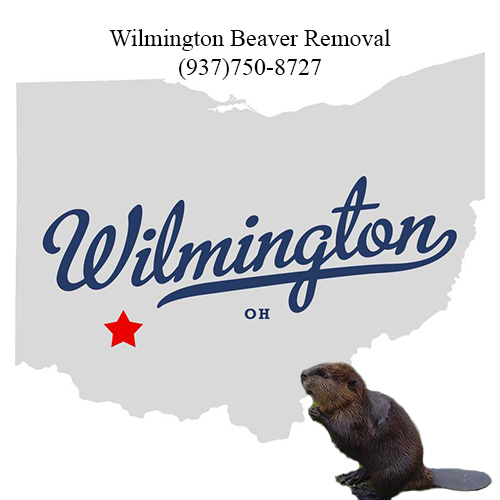 wilmington beaver removal (937)750-8727