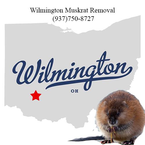 wilmington muskrat removal ohio (937)750-8727