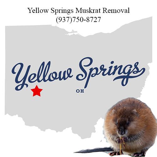 yellow springs muskrat removal (937)750-8727
