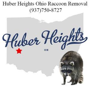 Huber Heights get rid of raccoon in attic