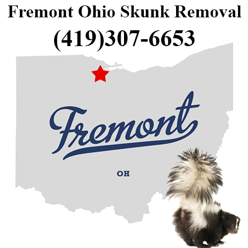 Fremont Skunk Removal Ohio