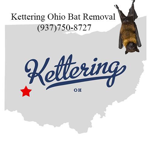 kettering get rid of bats in attic